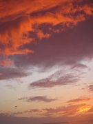 tawny sunset free e card