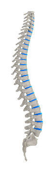 spine picture