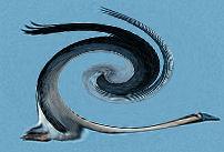 wild goose swirl